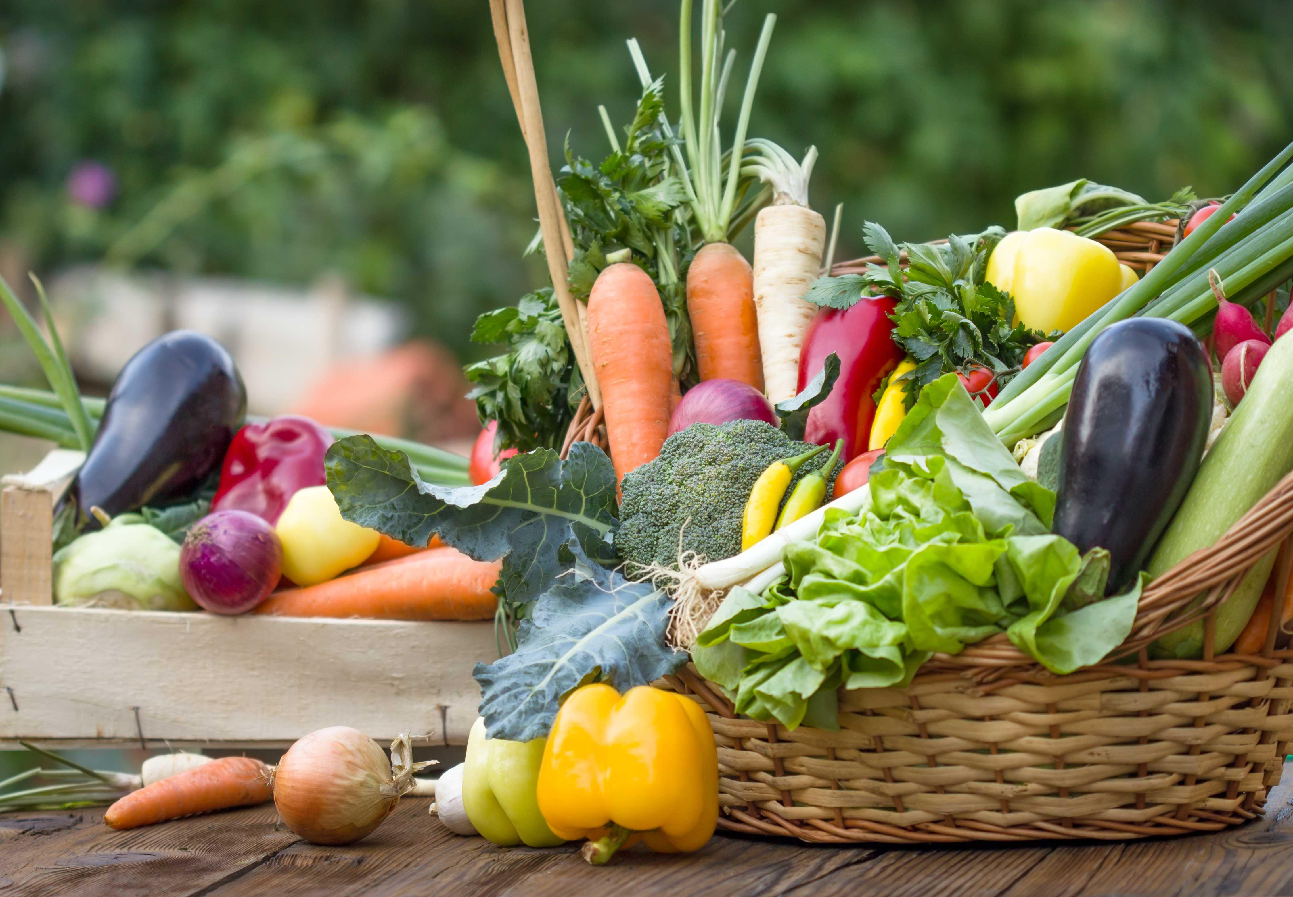 Découverte des plantes comestibles