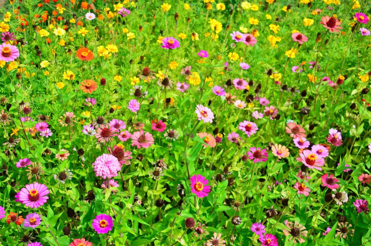 Les jardins fleuris