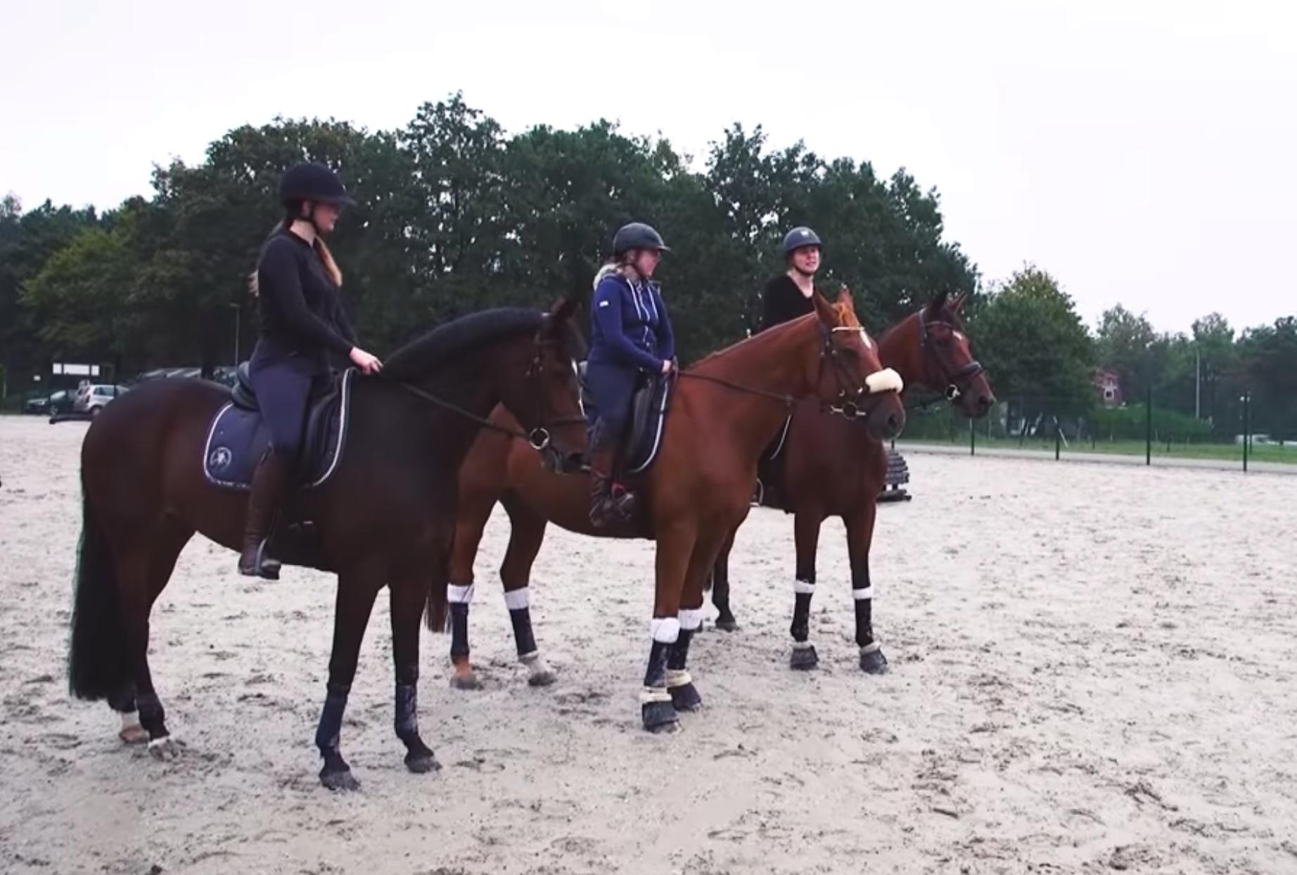 Les coulisses de l'équitation