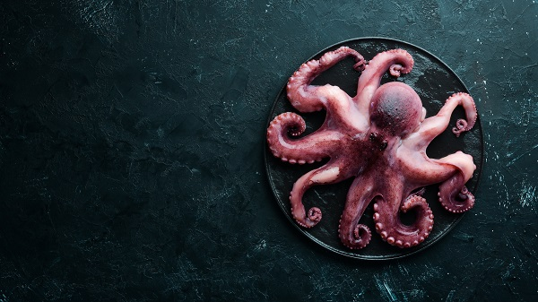 Octopus on a black background. Seafood. Free space for your text. flat lay