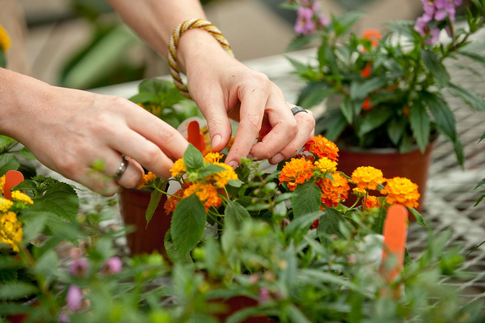 Le concours du Meilleur Jeune Jardinier se prépare à l'IPES Tournai
