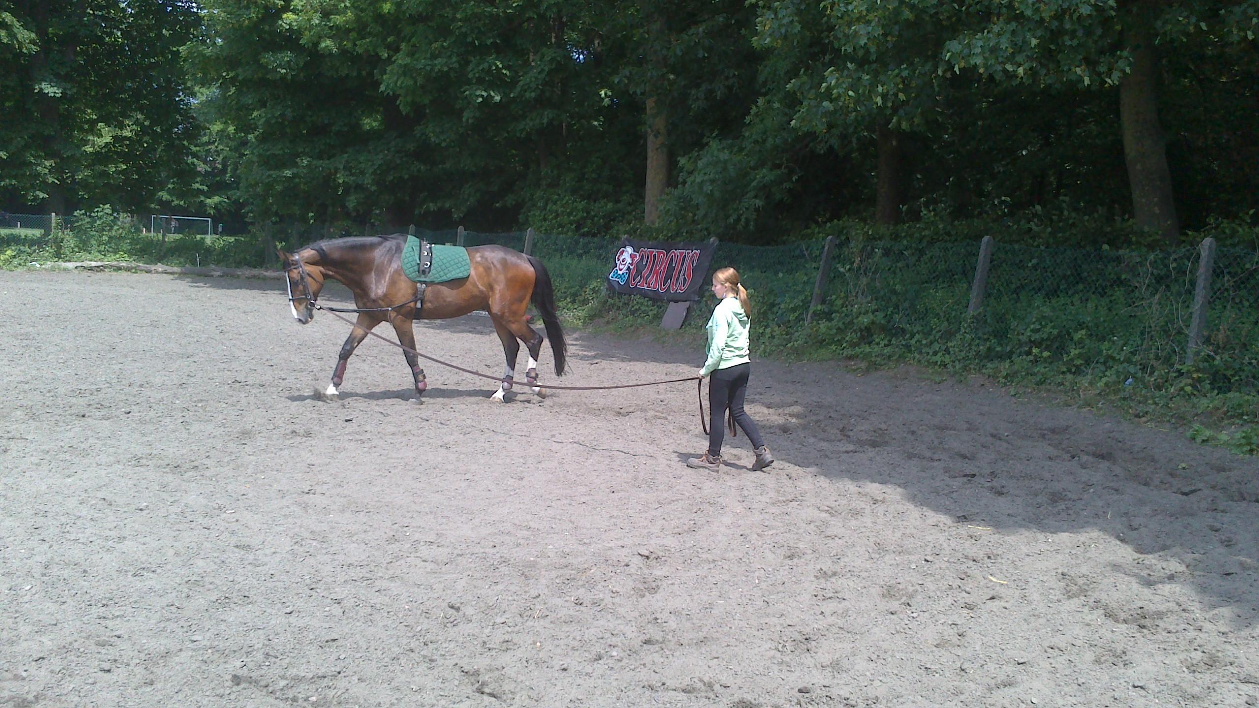 Palefrenier : l'amour du cheval avant tout !